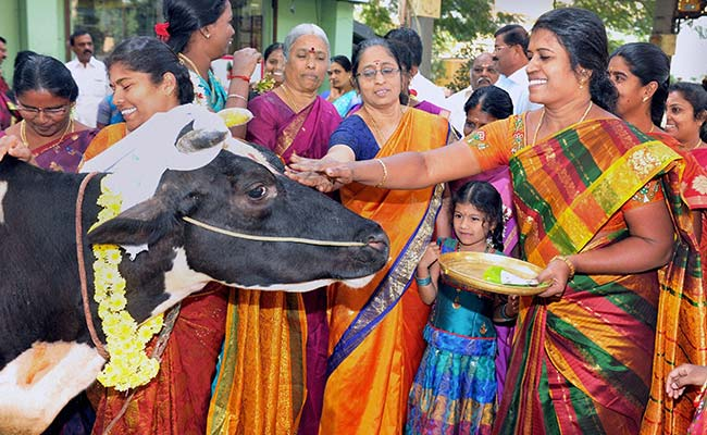 Pongal Day 2021: Customs and Rituals of Four Pongal Day