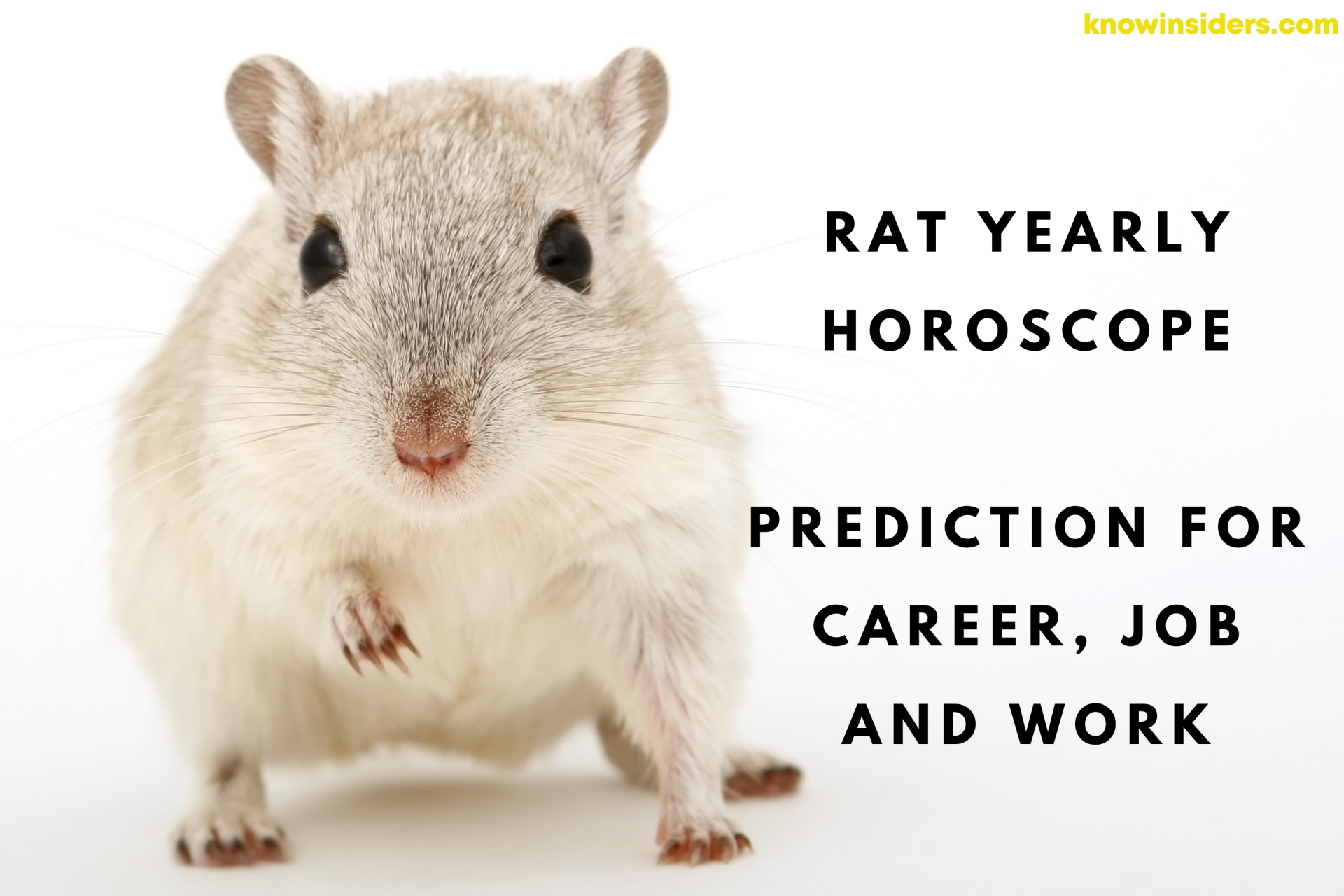 RAT Yearly Horoscope 2022: Prediction for Career, Job and Work
