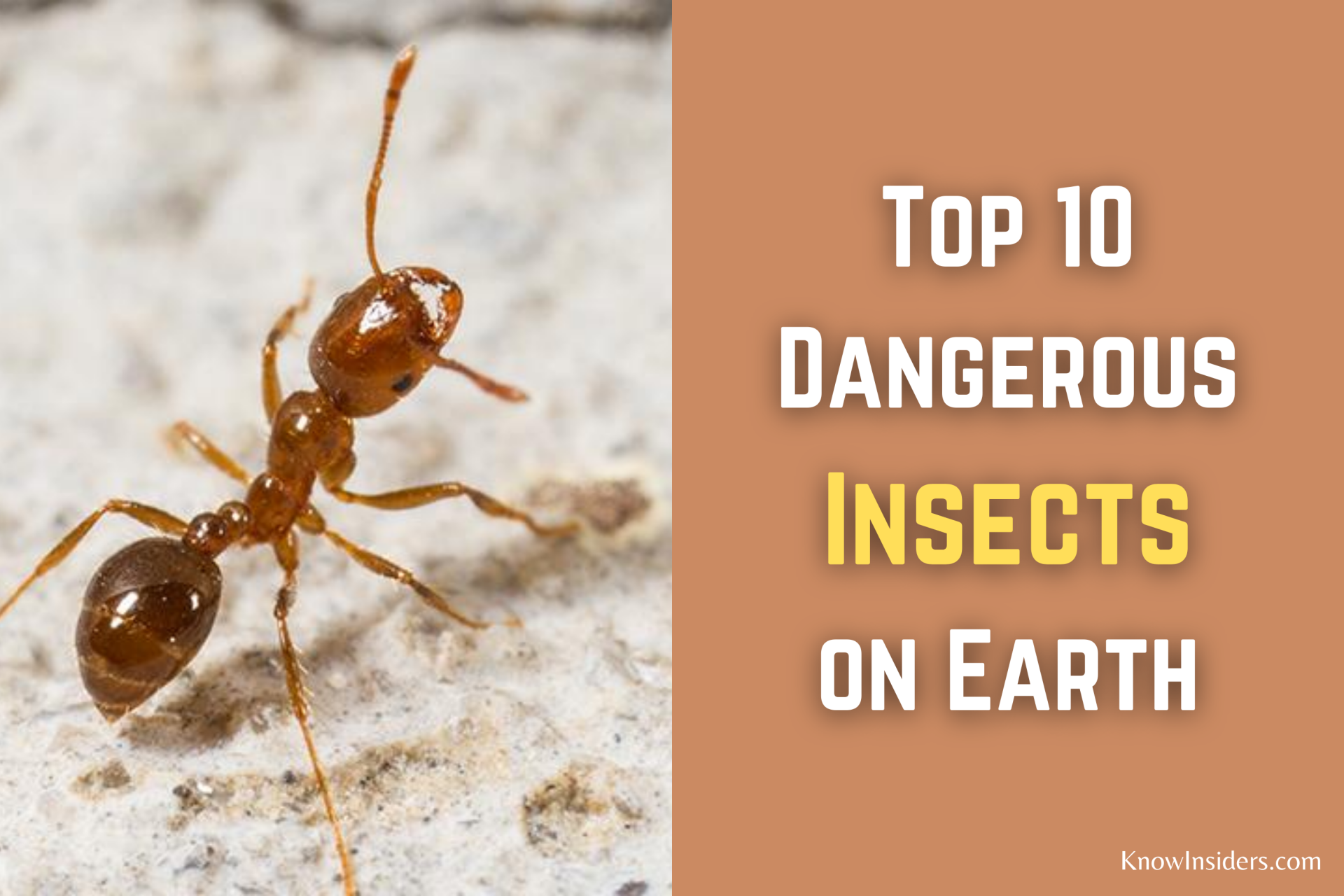 Top 10 Most Dangerous Insects in the World
