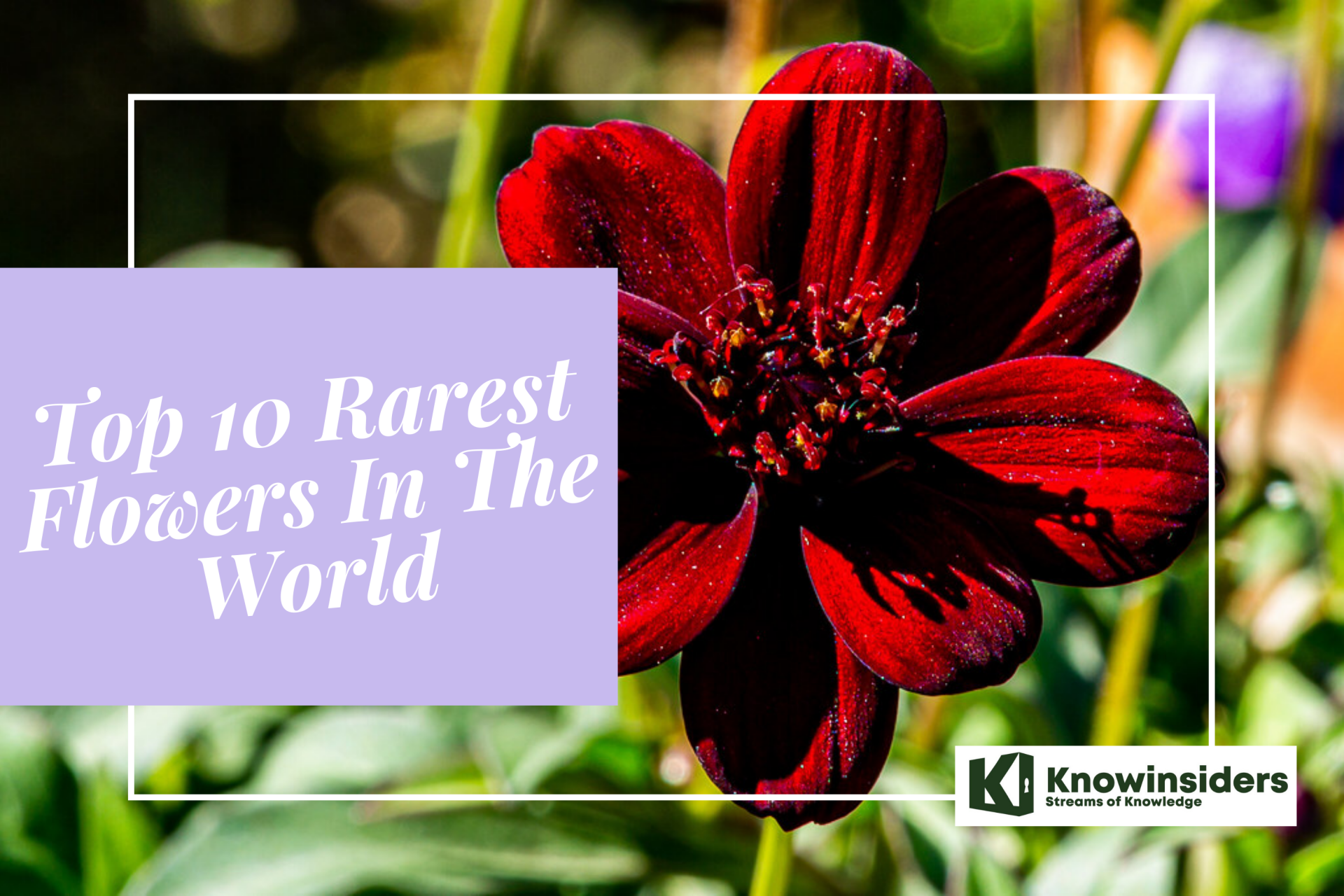10 Rarest Flowers In The World
