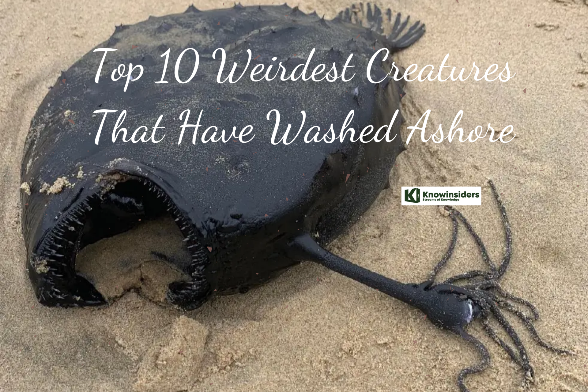 Top 10 Weirdest Creatures That Have Washed Ashore