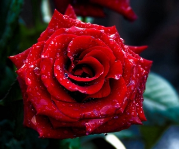 Top 9 Most Beautiful Flowers in the World You May not Know