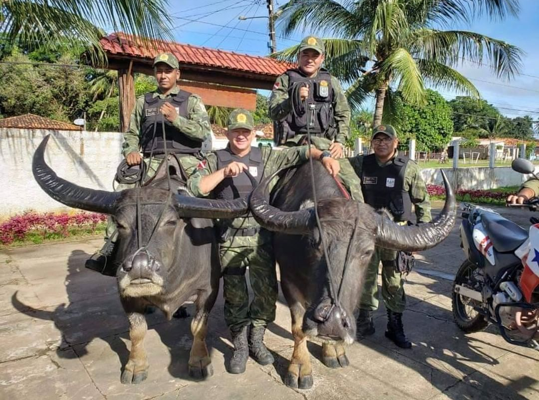 Only in Brazil: Police Patrol on Buffaloes