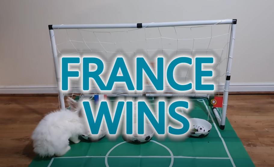 Bunny Rabbit Predicts France Win Over Portugal